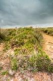 Sobre a charneca na angra do kynance em Cornualha Reino Unido Inglaterra fotos de stock