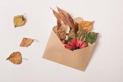 Sobre de Fflying con las plantas secas Imagen de archivo