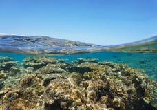 Sobre el arrecife de coral abajo de la superficie del mar y el cielo azul Foto de archivo
