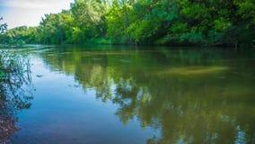 Sobre el río en los árboles de la naturaleza del bosque que pescan día soleado metrajes