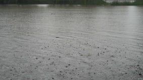 Sobre el río hay fuertes lluvias en un día nublado del otoño Las gotas de agua caen desde arriba en el agua oscura almacen de metraje de vídeo