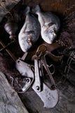 Sobre escalas de pescados de la brema de mar Imagen de archivo libre de regalías