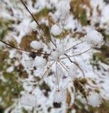 Sobre la nieve Umbel fotos de archivo libres de regalías