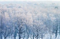 Sobre la opinión sobre el bosque congelado en invierno frío Imagenes de archivo