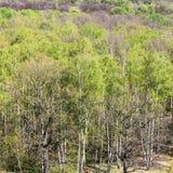 Sobre la vista de los árboles verdes de maderas en primavera Imágenes de archivo libres de regalías