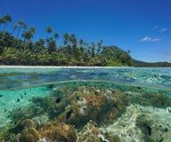 Sobre los pescados de anémona inferiores de mar de la isla de la laguna el Pacífico Foto de archivo libre de regalías