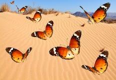 Sobre o deserto arenoso foto de stock