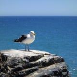 Sobre o mar Imagem de Stock