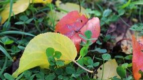 Sobre otoño Imágenes de archivo libres de regalías