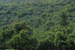 Sobre 50 por cento de Laos a paisagem é floresta preliminar Imagem de Stock Royalty Free