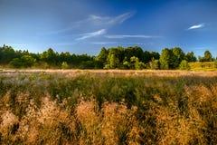 Sobre um alvorecer do campo e da floresta Fotografia de Stock