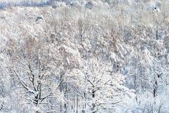 sobre vista del bosque nevado en invierno Imagen de archivo libre de regalías