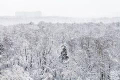 sobre vista del parque urbano nevado en invierno Fotografía de archivo libre de regalías