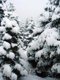 Sobrecarga de la nieve en el tiempo de la Navidad fotos de archivo