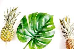 Sobremesa do verão com abacaxis e planta na opinião superior do fundo branco Imagem de Stock