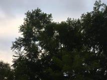 Sobreposição do céu e das árvores imagens de stock royalty free