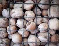 Sobreposição dos cocos na gaiola Imagens de Stock Royalty Free