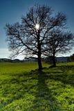słońca drzewo Fotografia Royalty Free