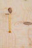 Socave la exudación del bolsillo de echada de madera de pino Imagen de archivo