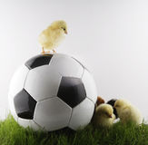 Soccer Stock Photo