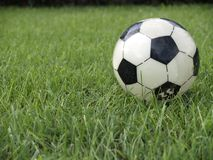 SOCCER BALL. IN THE GRASS FIELD Royalty Free Stock Photo