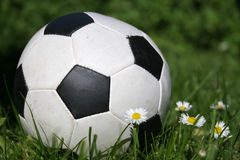 Soccer ball. Football in a grass with daisy Royalty Free Stock Image