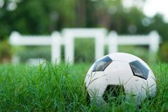 Soccer Ball Futbol on Grass royalty free stock photography