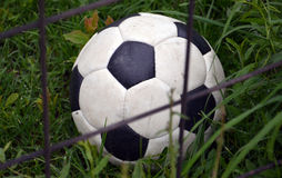 Soccer ball in a grass Stock Image