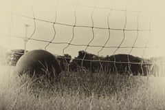 Soccer ball in the net of the goal. Stock Images