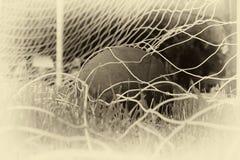 Soccer ball in the net of the goal. Stock Image