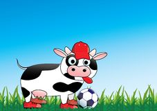 Soccer cow. Cute cow in sports outfit with ball on field Stock Image