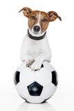 Soccer dog. Dog with a white soccer ball stock photos