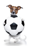 Soccer dog Stock Photography