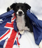 Soccer dog with australian flag royalty free stock photos