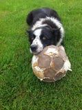 Soccer Dog Royalty Free Stock Photo