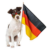 Soccer dog Royalty Free Stock Photography