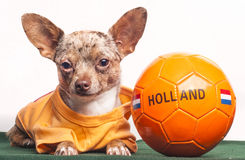 Soccer dog Holland Royalty Free Stock Image
