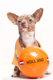 Soccer dog Holland ball Stock Images