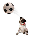 Soccer Dog. Royalty Free Stock Image