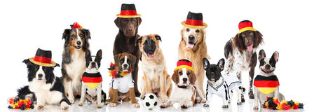 Soccer dog team Royalty Free Stock Photo