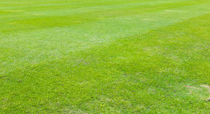 Soccer field. Grass Goal at the stadium Stock Photography