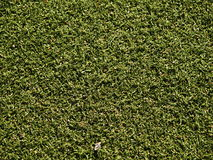 Soccer field grass on the green. Soccer field grass line on the green Royalty Free Stock Photo