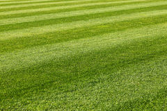 Soccer field. Stripes on green grass soccer field background Royalty Free Stock Image