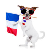Soccer football dog Royalty Free Stock Images
