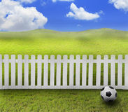Soccer football on green grass Stock Photography