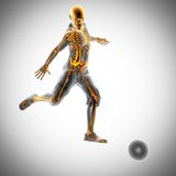 Soccer game player radiography image. Soccer game player radiography scan image Royalty Free Stock Images