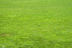 Soccer grass Royalty Free Stock Photo