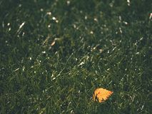 Soccer green. End of football season. Dry leaves   fallen on ground of plastic football turf. Royalty Free Stock Images