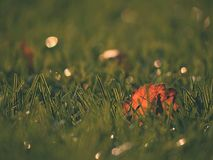 Soccer green. End of football season. Dry leaves   fallen on ground of plastic football turf. Stock Photography