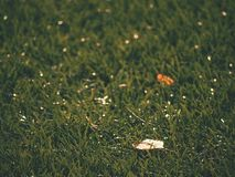 Soccer green. End of football season. Dry leaves   fallen on ground of plastic football turf. Soccer green. End of football season. Dry leaves and seeds  fallen Stock Images